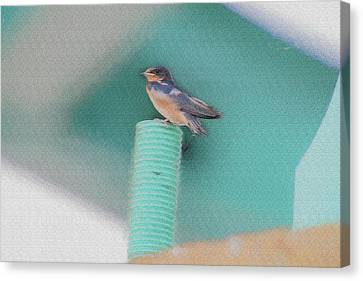 Barn Swallow Posing On Perch....paintography Canvas Print by Dan Friend