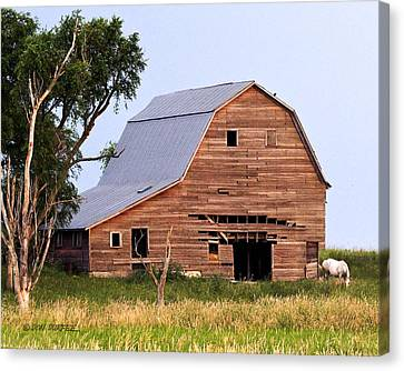 Canvas Print featuring the photograph Barn With White Horse by Don Durfee