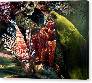 Barnacle Buddies Canvas Print by Bill Pevlor