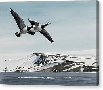 Barnacle Geese Canvas Print by Dag Peterson