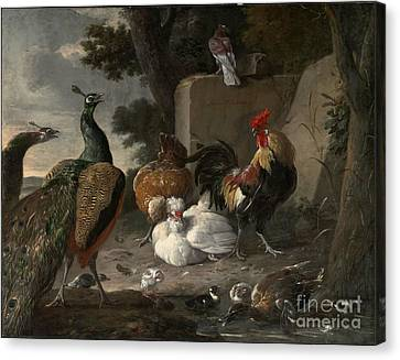 Barnyard Fowl And Peacocks Canvas Print by MotionAge Designs