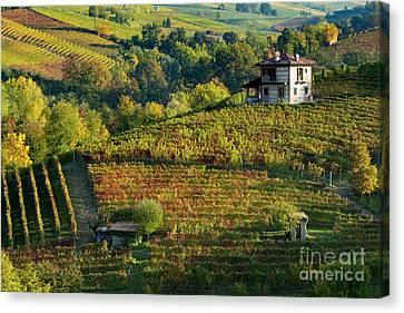 Barolo Vineyard Canvas Print