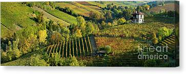 Barolo Vineyards Canvas Print