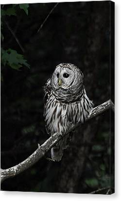Canvas Print featuring the photograph Barred Owl 2 by Glenn Gordon