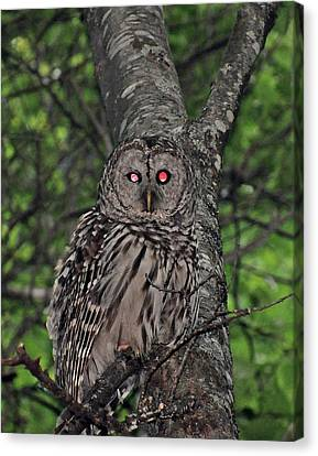 Canvas Print featuring the photograph Barred Owl 3 by Glenn Gordon