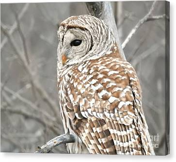 Barred Owl Close-up Canvas Print by Kathy M Krause