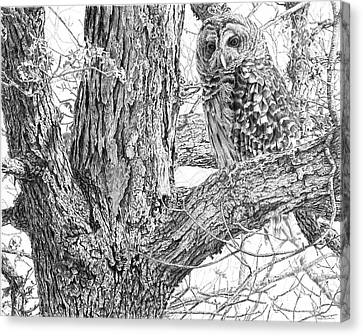 Raptor Canvas Print - Barred Owl by Craig Carlson