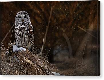 Canvas Print featuring the photograph Barred Owl On Log by Michael Cummings