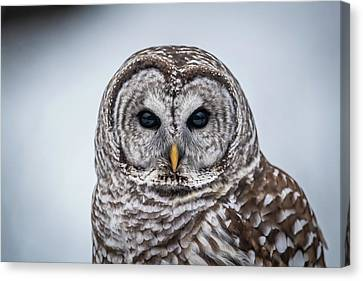 Canvas Print featuring the photograph Barred Owl by Paul Freidlund