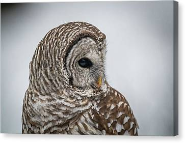 Canvas Print featuring the photograph Barred Owl Portrait by Paul Freidlund