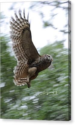 Barred Owl Taking Flight Canvas Print