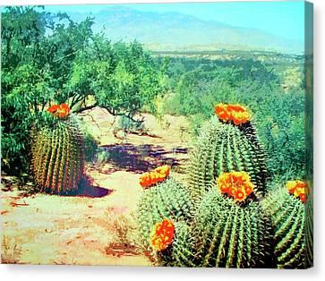 Barrel Cactus In Bloom Canvas Print