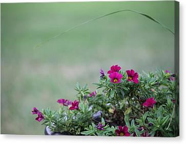 Barrel Of Flowers Canvas Print