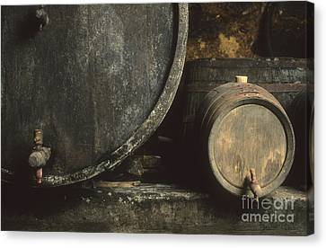 Cellar Canvas Print - Barrels Of Wine In A Wine Cellar. France by Bernard Jaubert