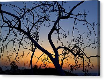 Canvas Print featuring the photograph Barren Tree At Sunset by Lori Seaman