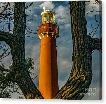Canvas Print featuring the photograph Barrny Thru The Trees by Nick Zelinsky