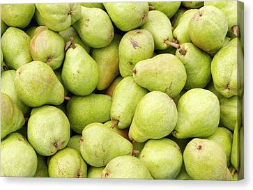 Bartlett Pears Canvas Print by John Trax