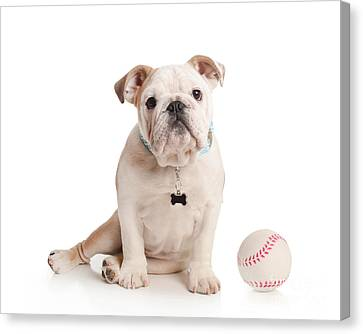 Doggy Cards Canvas Print - Baseball Pup by Jt PhotoDesign