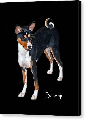 Basenji Canvas Print by Larry Linton