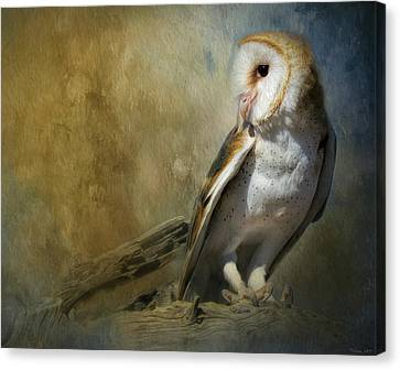 Bashful Barn Owl Canvas Print