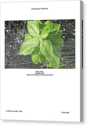 Canvas Print featuring the photograph Basil Basil by Robin Coaker