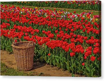 Canvas Print featuring the photograph Basket For Tulips by Susan Candelario