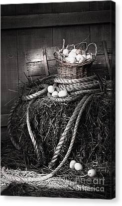 Basket Of Eggs On A Bale Of Hay Canvas Print by Sandra Cunningham