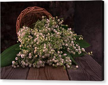 Canvas Print featuring the photograph Basket Of Fresh Lily Of The Valley Flowers by Jaroslaw Blaminsky