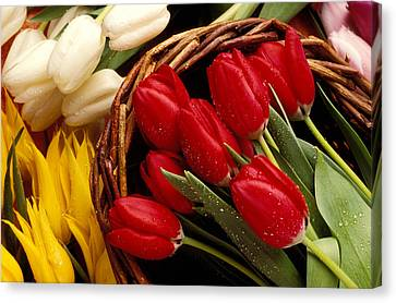 Basket With Tulips Canvas Print by Garry Gay