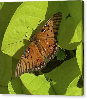 Canvas Print featuring the photograph Basking Butterfly by Michael Flood