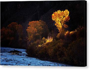 Canvas Print featuring the photograph Basking In The Light by Andrew Soundarajan