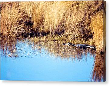 Basking In The Sun Canvas Print by Jan Amiss Photography