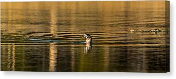 Canvas Print featuring the photograph Basking In The Sunset Light by Yeates Photography