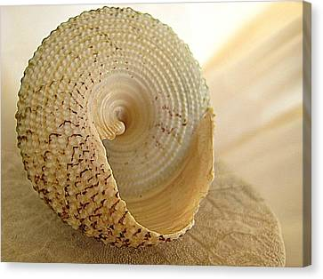 Basking Seashell Canvas Print by Shirley Sirois
