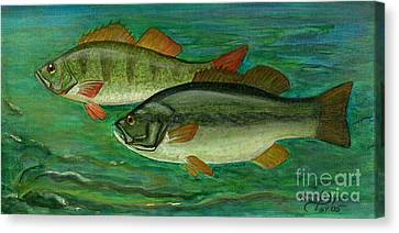 Ryby W Sztuce Canvas Print - Bass And Perch by Anna Folkartanna Maciejewska-Dyba
