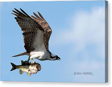 Bass Master 4 Canvas Print by Don Durfee