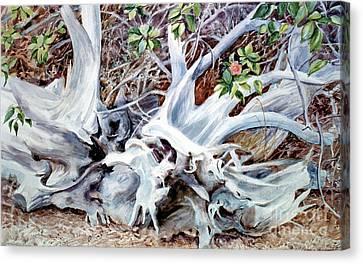 Bass River Cedar Stump Canvas Print by Karol Wyckoff