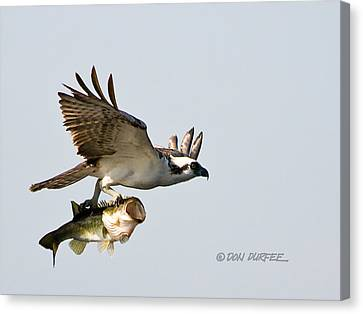 Canvas Print featuring the photograph Bassmaster 2 by Don Durfee