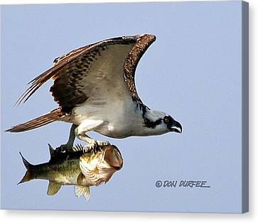 Canvas Print featuring the photograph Bassmaster 3 by Don Durfee