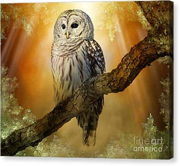 Bathed In Light  Canvas Print by Heather King