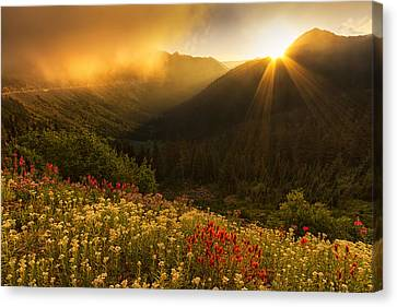 Bathed In Light Canvas Print by Mark Kiver