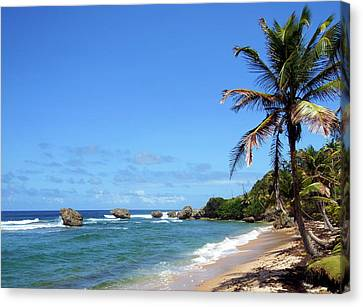 Canvas Print featuring the photograph Bathsheba, Barbados, by Kurt Van Wagner