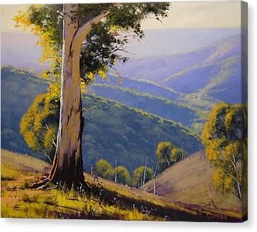 Gum Trees Canvas Print - Bathust Gum  by Graham Gercken