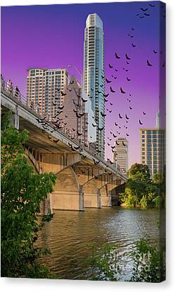 Bats Over Austin Canvas Print by Juli Scalzi
