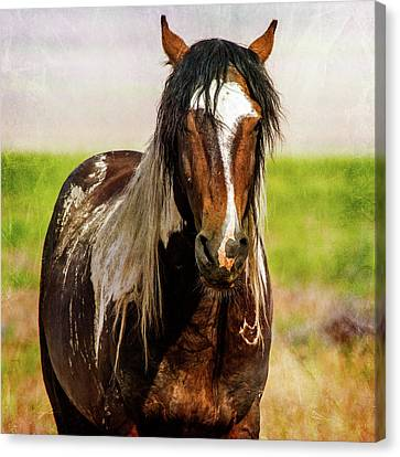 Canvas Print featuring the photograph Battle Worn Stallion by Mary Hone