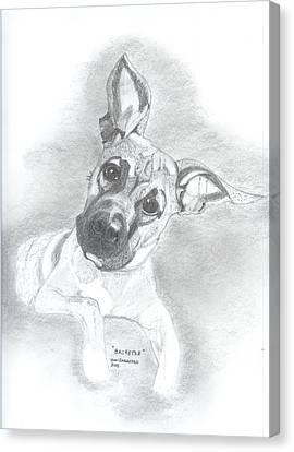 Baxter Canvas Print by Don  Gallacher