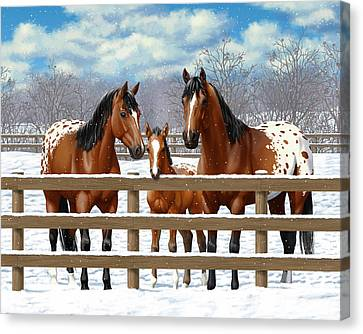 Bay Appaloosa Horses In Snow Canvas Print by Crista Forest