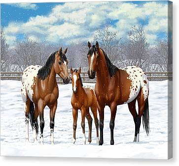 Bay Appaloosa Horses In Winter Pasture Canvas Print