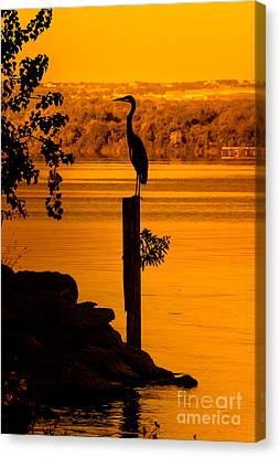 Bay At Sunrise - Heron Canvas Print by Robert Frederick