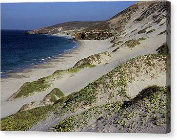 Bay Beach And Sand Dunes Canvas Print by Don Kreuter